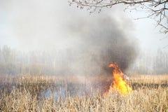 Brandmannen släcker burninggräs i Ukraina Royaltyfria Foton