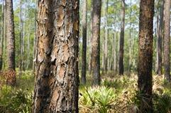 brandskog Fotografering för Bildbyråer