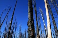brandskogen återstår Fotografering för Bildbyråer
