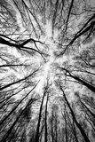 brandskogtrees Arkivbild