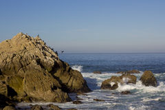 Brandt's cormorants on a rock, 17 Mile Drive Royalty Free Stock Images