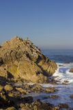 Brandt's cormorants on a rock, 17 Mile Drive Stock Image