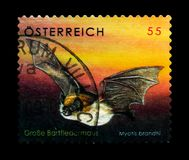 Brandt ` s nietoperza Myotis brandtii, przyrody seria około 2007, Zdjęcia Royalty Free