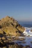 Brandts Kormorane auf einem Felsen, 17 Meilen-Antrieb stockbild