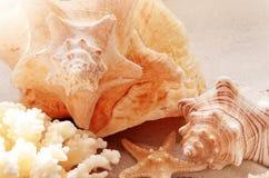 Brandung, Sand und Steine Seashell auf dem Sand Beschneidungspfad eingeschlossen stockbild