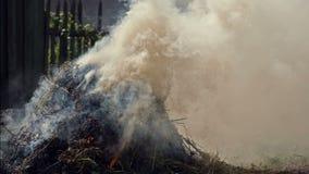 Brandwond Droog Gras stock videobeelden