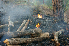 Brandwond droog gras, bosbrand Stock Foto
