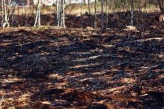 Brandwond droog gras op bosachtergrond stock foto's