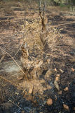 Brandwond met brandgrond in wildernis royalty-vrije stock afbeelding