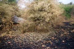 Brandwond met brandgrond in wildernis royalty-vrije stock fotografie