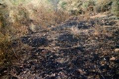 Brandwond met brandgrond in wildernis royalty-vrije stock foto's