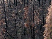 Brandwond uit bosdetails stock foto's