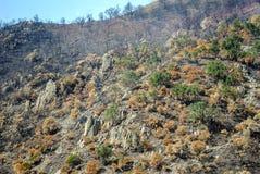 Brandwond uit bossen in Spanje stock foto's
