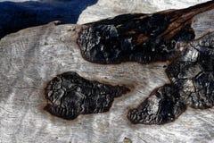 Brandwondtekens op een boomboomstam op het strand royalty-vrije stock afbeelding