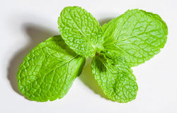 Brandy mint Royalty Free Stock Images
