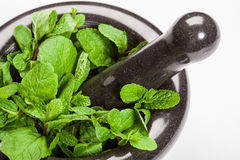 Brandy mint in a mortar Royalty Free Stock Photography