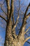 树Brannches 免版税库存图片