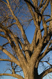 树Brannches 免版税图库摄影