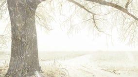 Branshes d'arbre d'hiver aux chutes de neige de pré banque de vidéos