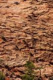 Brant bergklippaframsida Arkivfoton
