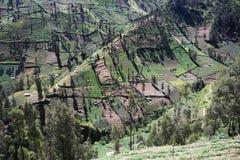 Brant jordbruks- land på berglutningar Fotografering för Bildbyråer
