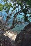 Brant klippa in i det gr?na havet royaltyfria bilder