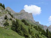 Brant klippa och sörjer träd nära Engelberg, Schweiz Arkivfoto