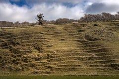 Brant kulle med att gräs för får och blå himmel royaltyfri fotografi