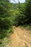Brant nedstigning från en skogsbevuxen kulle royaltyfria bilder