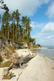 Brant sandig strand och pinjeskog på kusterna av havet eller sjön arkivfoton