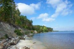 Brant sandig strand och pinjeskog på kusterna av havet eller sjön fotografering för bildbyråer