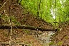 Brant skogravin med den lilla floden royaltyfri fotografi