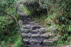 Brant slinga som leder till det Machu Picchu berget arkivfoto