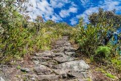Brant slinga som leder till det Machu Picchu berget fotografering för bildbyråer