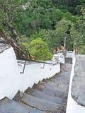 Brant trappa i bergen av Serra da Lousã, Portugal fotografering för bildbyråer