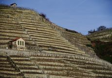 Brant vingård med bergklippa och vingårdkoja 2 royaltyfri foto