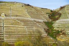 Brant vingård med bergklippa och vingårdkoja 2 arkivfoton
