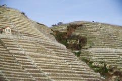 Brant vingård med bergklippan och vingårdkojan royaltyfri foto