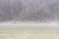 Brant vinterskogbank som ner leder till en flod med ljus mist royaltyfri bild