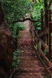 Branta moment - ner en bana i en skog arkivfoton
