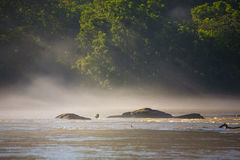 Brantacanadensis på Chattahoochee River i groda Royaltyfria Foton