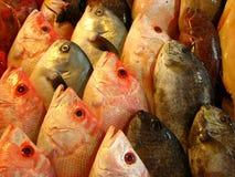 Branzini o pesci freschi dell'epinefolo Fotografie Stock Libere da Diritti