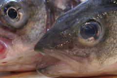 Branzino Royalty Free Stock Image
