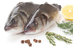 Branzino del pesce crudo con il limone ed il prezzemolo isolati su backg bianco Fotografia Stock