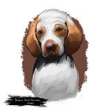 Braque Saint-Germain puppy dog breed digital art illustration isolated on white. Popular pup portrait with text. Cute. Pet hand drawn portrait. Graphic clip art royalty free stock image