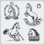 Brasão da heráldica do cavalo Etiquetas, emblemas e elementos do projeto para o clube de esporte Foto de Stock