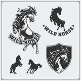 Brasão da heráldica do cavalo Etiquetas, emblemas e elementos do projeto para o clube de esporte Fotografia de Stock Royalty Free