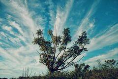 Bras d'extension de l'arbre vert Photos stock