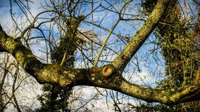 Bras d'un arbre sans feuilles Image stock