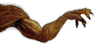 Bras de monstre de loup-garou Image stock